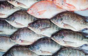 Enhancing Seafood Quality