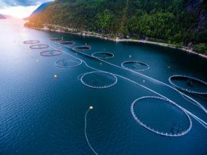 Probiotic Use in Aquaculture